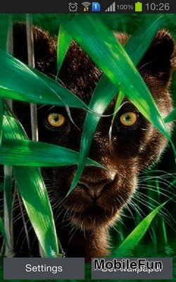 Forest Panther (Лесная пантера)