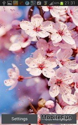 Cherry Blossom by Creative Factory Wallpapers (Вишни в цвету)